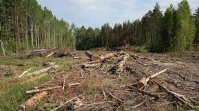 Збережемо ліси разом